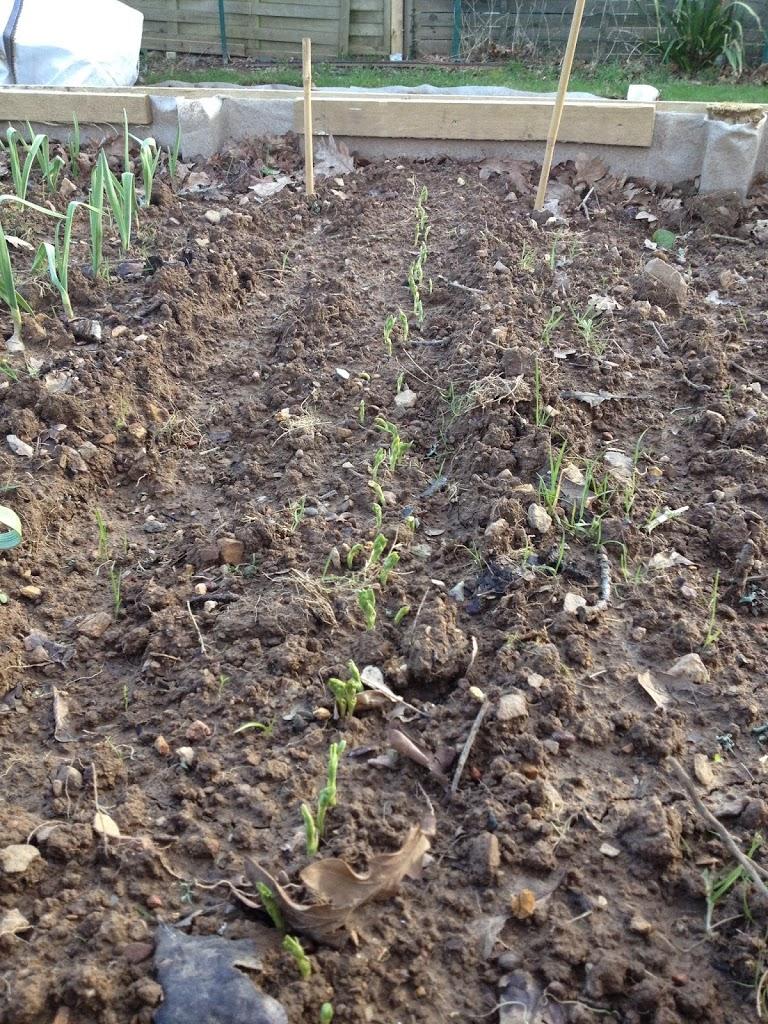 Jardinage Coatig Plougastel-Daoulas